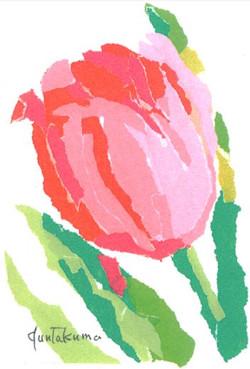 Tulip1_2