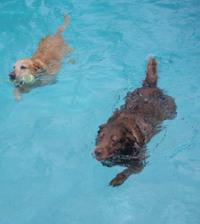 Swimmin2dogs