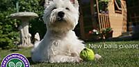 Wimballdog