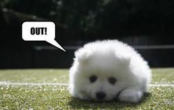 Tenniscalloutdog