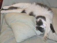 Cat_stretching