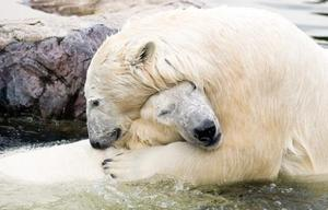 Polarbearhug_big
