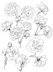 Rosehow