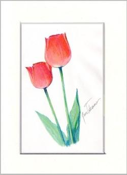 Tulippencilwmid