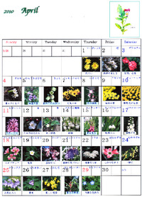 April_flower_calendar