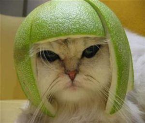Catsfruirt