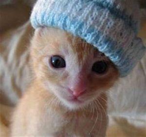 Kittycatsnkit
