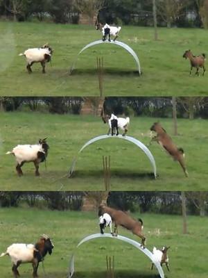 Goatplay