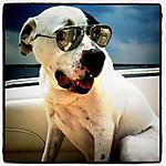 Sunglassdog