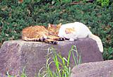 Catsleep_2
